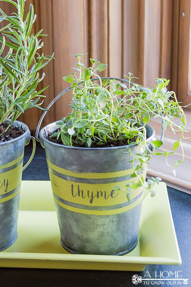 Small metal buckets with herbs
