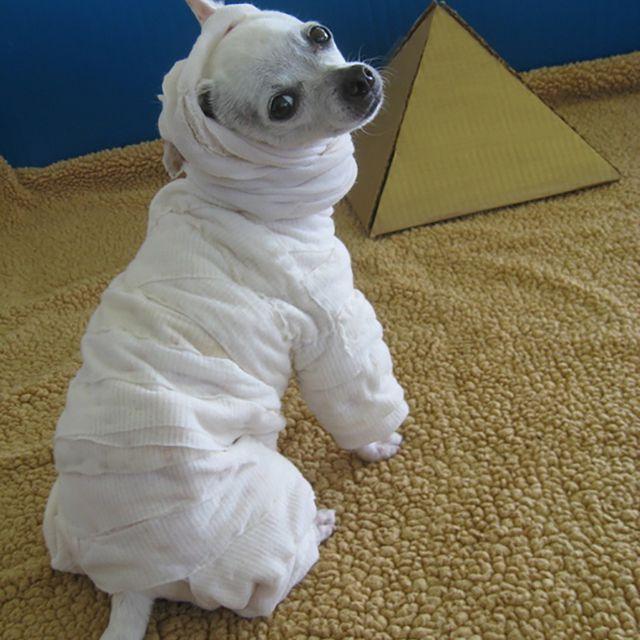 DIy dog mummy costume