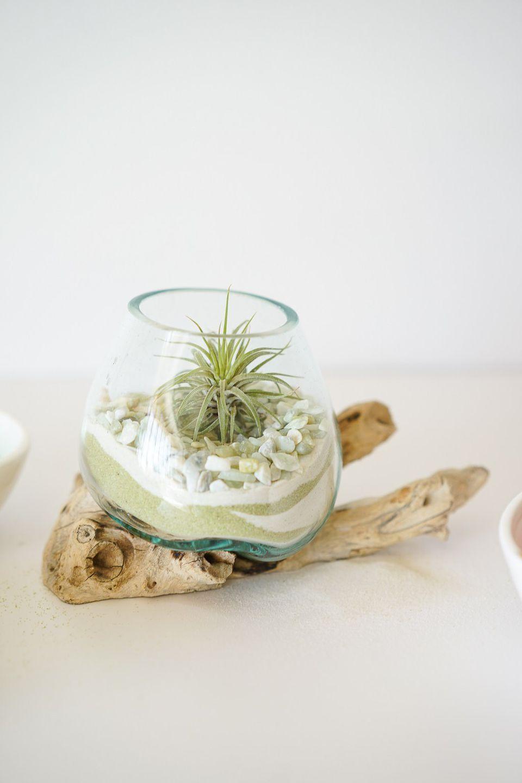 succulent terrarium idea