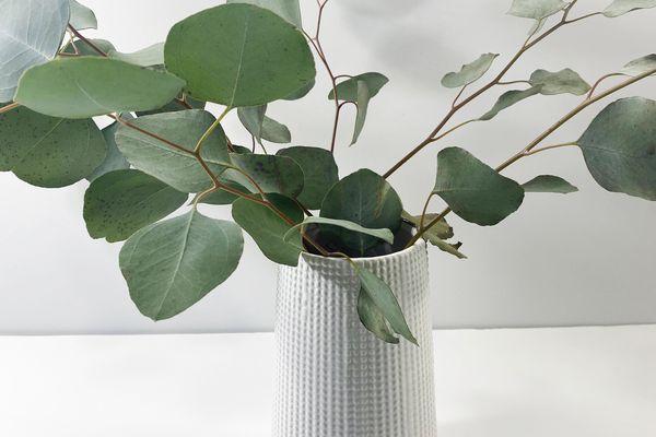 Eucalyptus in a white vase