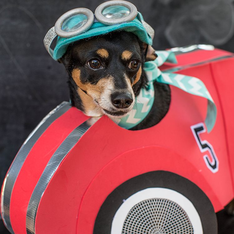 Dog Race Car Driver Costume