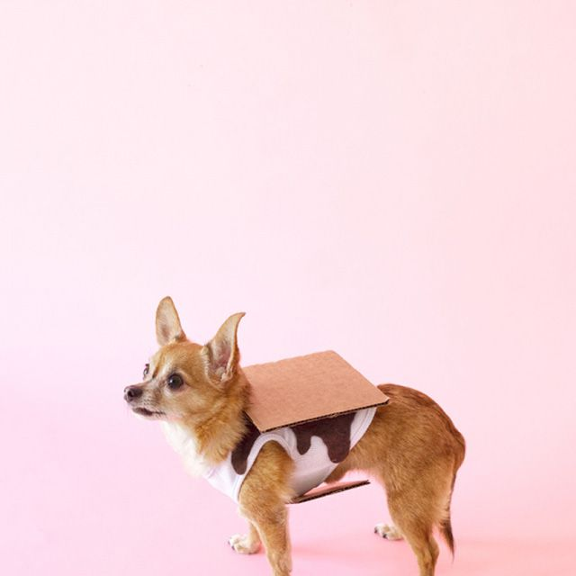 DIY dog costume smore