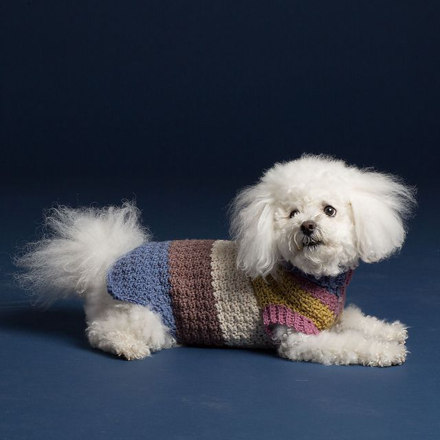 White fluffy dog in color-blocked sweater