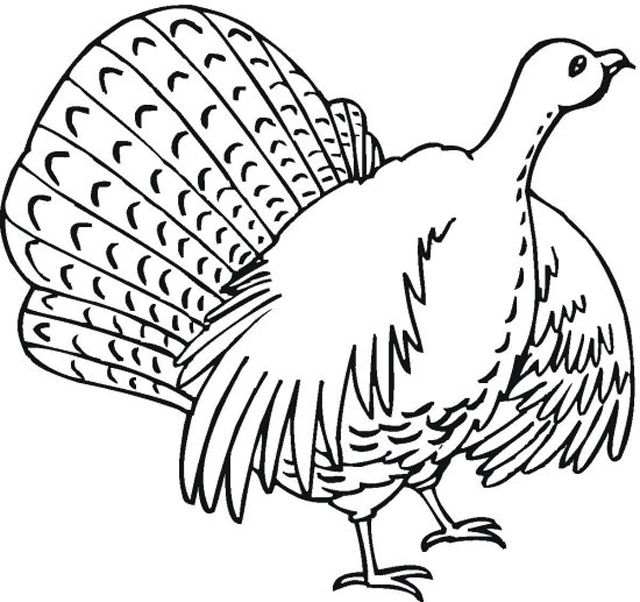 Even More Turkey Coloring Pages A In The Wild