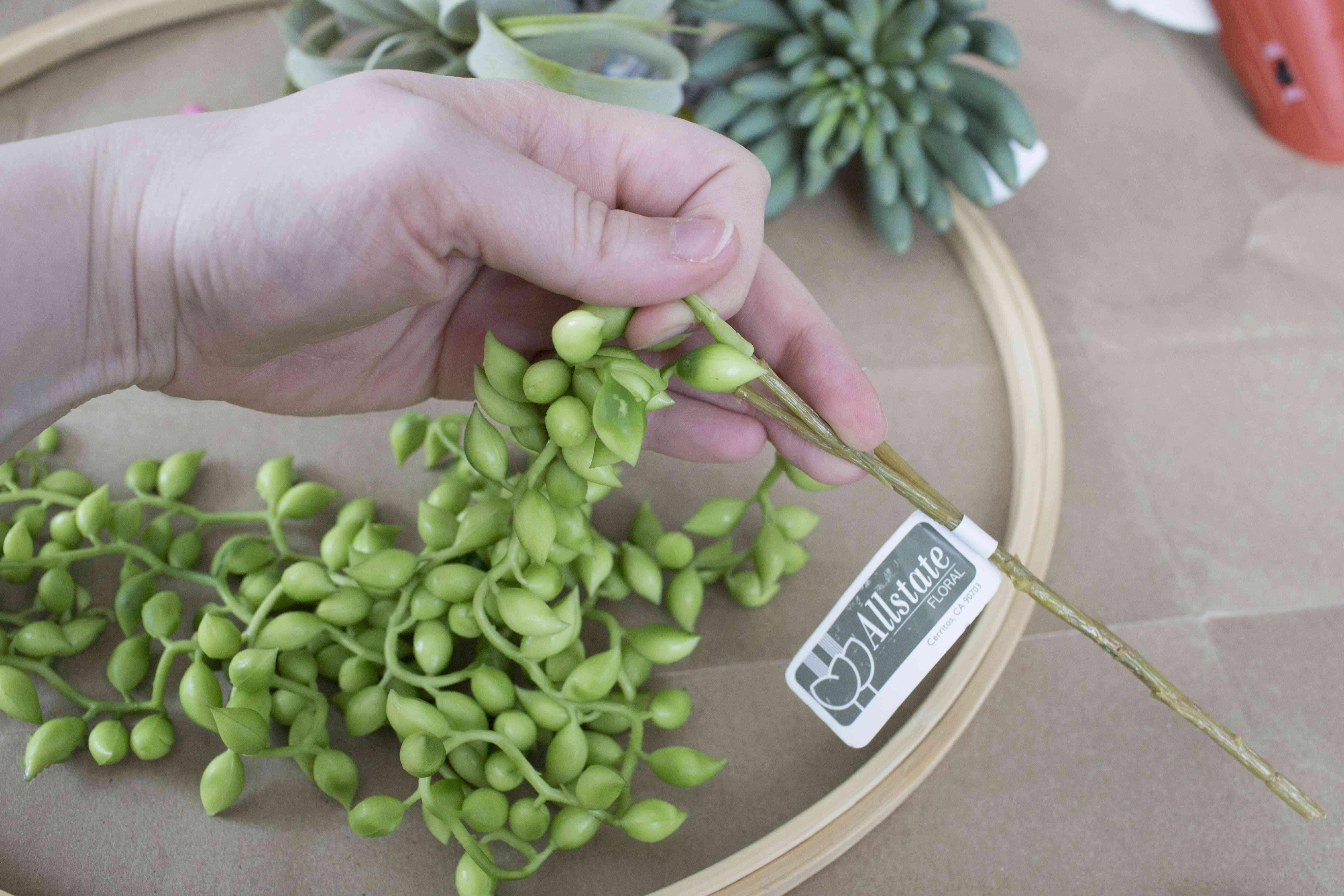 Prep succulents