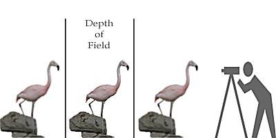 depth of field illustration