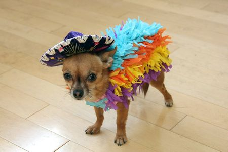 craft a pia ata dog costume with crepe paper