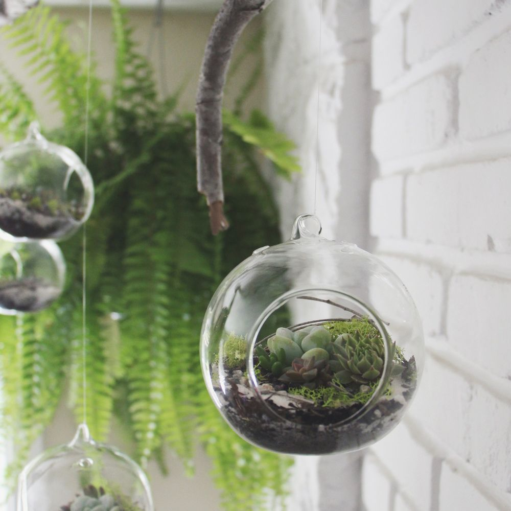 A group of hanging succulent terrariums against a white brick wall