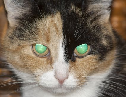 cat with glowing eyes