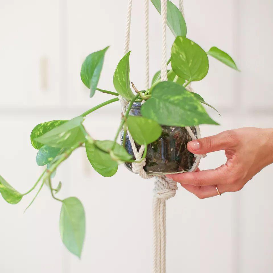A plant in a hanging macrame mason jar