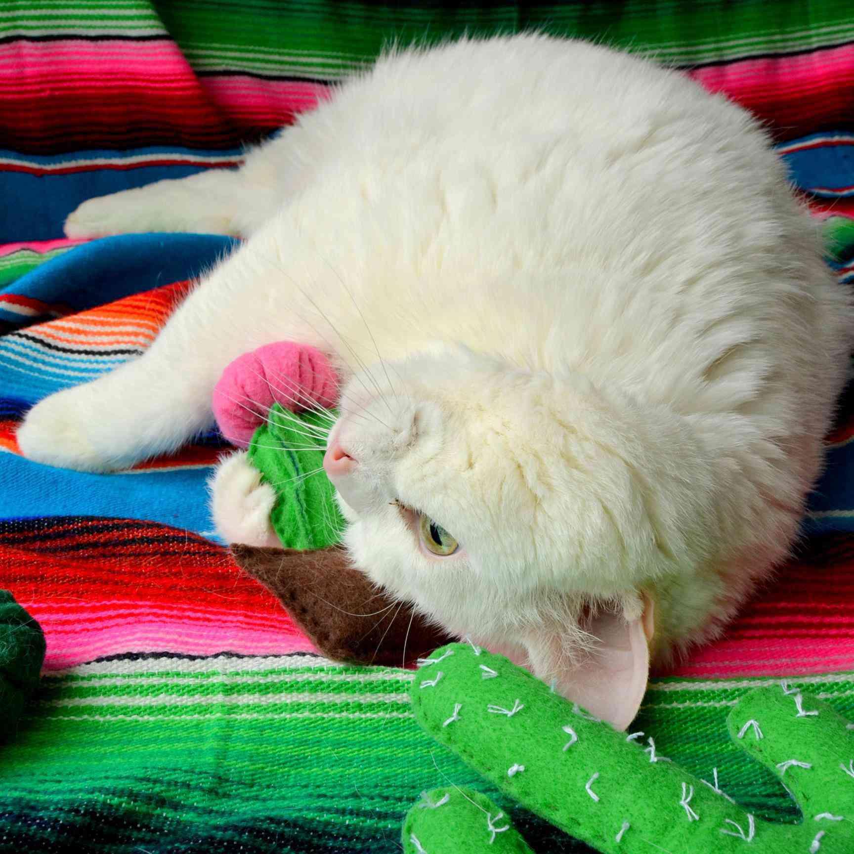 Cactus Catnip Toy