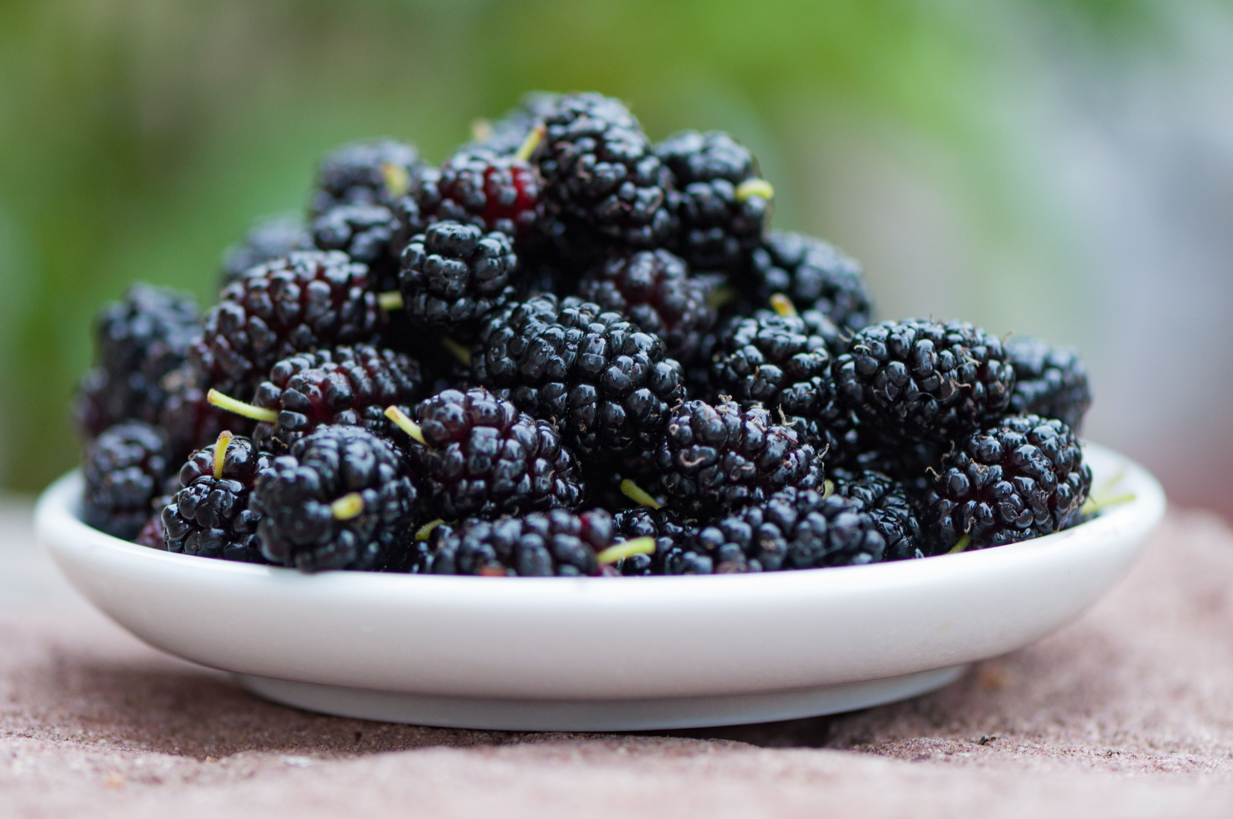 Close up of mulberries