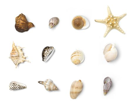how to make miniature seashells from polymer clay